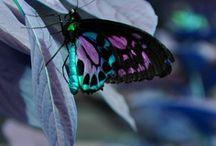 butterflies & others / by Linda Alongi Misnik