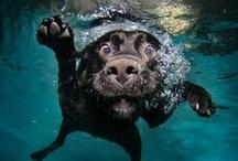 Animals :) / by Cheshire Catnip