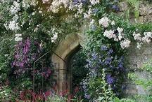 Secret Garden / by Lacey Dianne