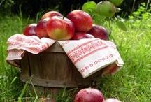 Happy Homestead / by Win-Win Farm