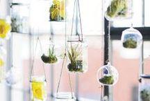 Mason Jar Crafts & Home Decor  / by Cindi Bisson