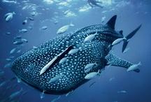 Sharks / by Musée océanographique Monaco - Aquarium