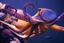 Octopus / by Musée océanographique Monaco - Aquarium