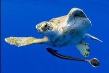 Turtles / by Musée océanographique Monaco - Aquarium