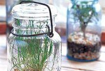 Glass (&) Jars / by reggie fisher