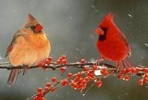 Birds / by Rita Reuter