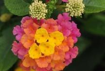 gardens/flowers / by Janie Thomas