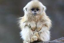 monkey monkey monkey / by Janie Thomas