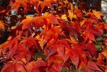autumn / by Janie Thomas