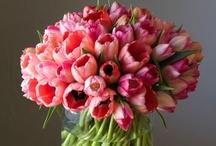 Arrangements / ~beautiful bouquets~ / by Nicki Boettcher