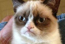 Grumpy Cat / by Ann Streharsky