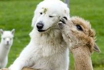 Adorable Animals / Pictures of cute, cuddly or beautiful animals / by Monica McPherrin