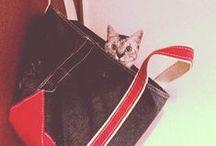 L.L.Bean Cat Lovers / Cats and kittens that adore L.L.Bean / by L.L.Bean