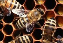 Bees and bee-keeping / by Jill
