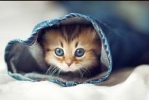 Cute Creatures.. / by Antoinette Sisouw
