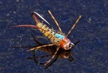 Fly Tying / by Tom Carpenter