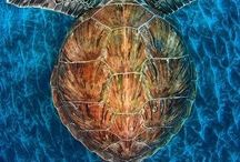 Sea Turtles / by Royce Waxenfelter