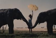 Lovely Elephants!  / by Ingrid Fonseca