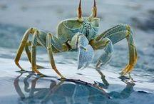 OCEAN LIFE LOVES / by Sheryl Hicks