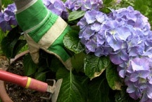 Tips & Tricks of the Trade / DIY health and beauty and cleaning products,  Homemaking tips. / by Sarah Spanos