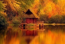 Falling for Autumn... / Love this time of year! / by Michele