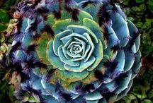 Southwest Cacti/Succulents/Desert Gardens / by Kathleen Ann H.