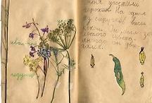 Manuscripts / by Elena Romero
