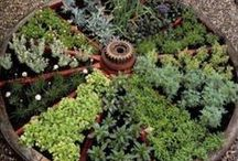 Herbs / Hints and ideas for growing and using herbs! / by Laurin Lindsey