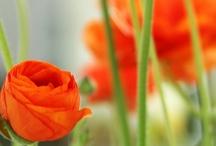 Orange / by Joanne