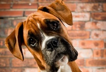 Dog Kennels / by Cindy Johnson