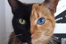 Kitty Kitty! / by Mary Ann Stewart