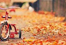 Fall / by izabel