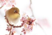 Spring / by izabel