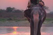 India / by Debra Tindale