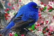 Birds / by Mary Ann Stewart