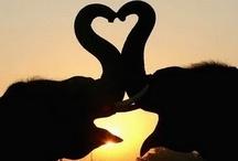 ♥Those Majestic Elephants / by Sharon Hagel