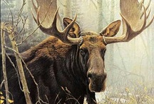 Moose / by Darla Cole