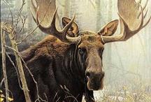 Moose / by Darla Cole