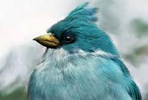 Birds / by Darla Cole