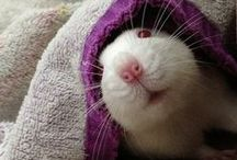 Mice for Mushy / by Darla Cole