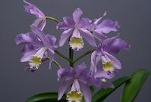 Orchid / by Darla Cole