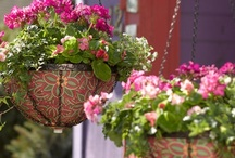 Gardening in Small Spaces / Patios, decks, planters, and window sills all offer opportunities to garden! / by Gardener's Supply