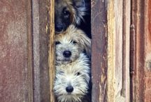 PRECIOUS PETS / Precious pups, dogs and a few kitties along the way! / by Lydia Moss