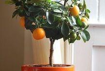 Practical Garden / by Suzanne Hood