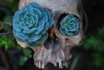Unusual Plants / by Miss Crumplebottom