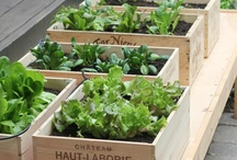 Living Fresh/Gardening / Tips on Gardening / by GNC