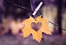 Fall in Love / by Connie Robinson