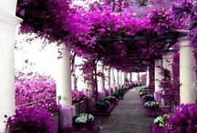 SIMPLY BEAUTIFUL ~ 2 / Beautiful landscapes ~ waterfalls ~ flowers ~ nature photography ~ birds ~  / by Darlene Carter-Johnson