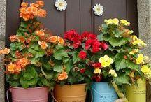 FLOWER ARRANGEMENTS AND CENTERPIECES / by JGW