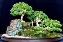 Horticulture-Bonsai, Saikei, Kokedama, Kusamono, Shitakusa, etc. / by Arlene Allen